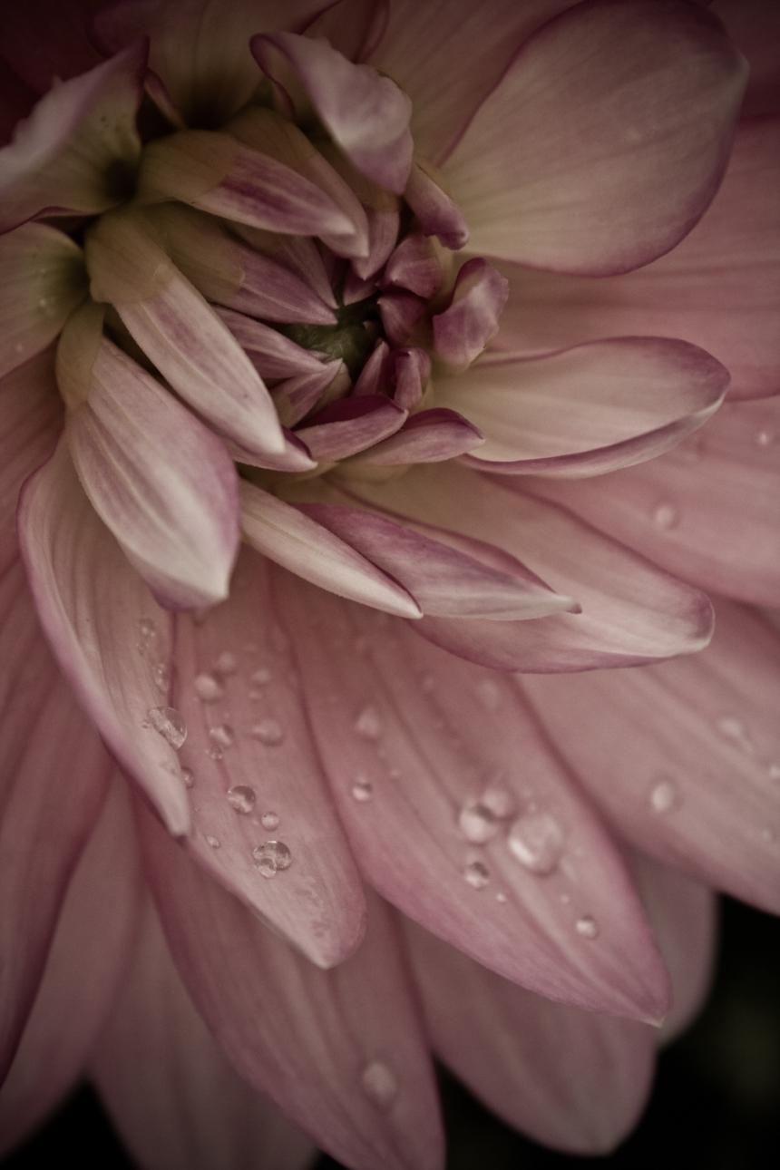 Neoghborhood flowers-19